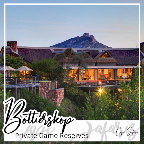 Botlierskop Private Game Reserve Fetured Image 2019