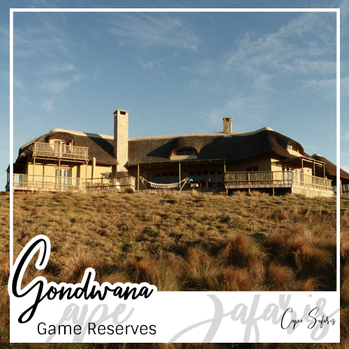 Gondwana Game Reserve Fetured Image 2019