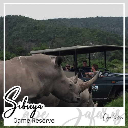 Sibuya Game Reserve Fetured Image 2019